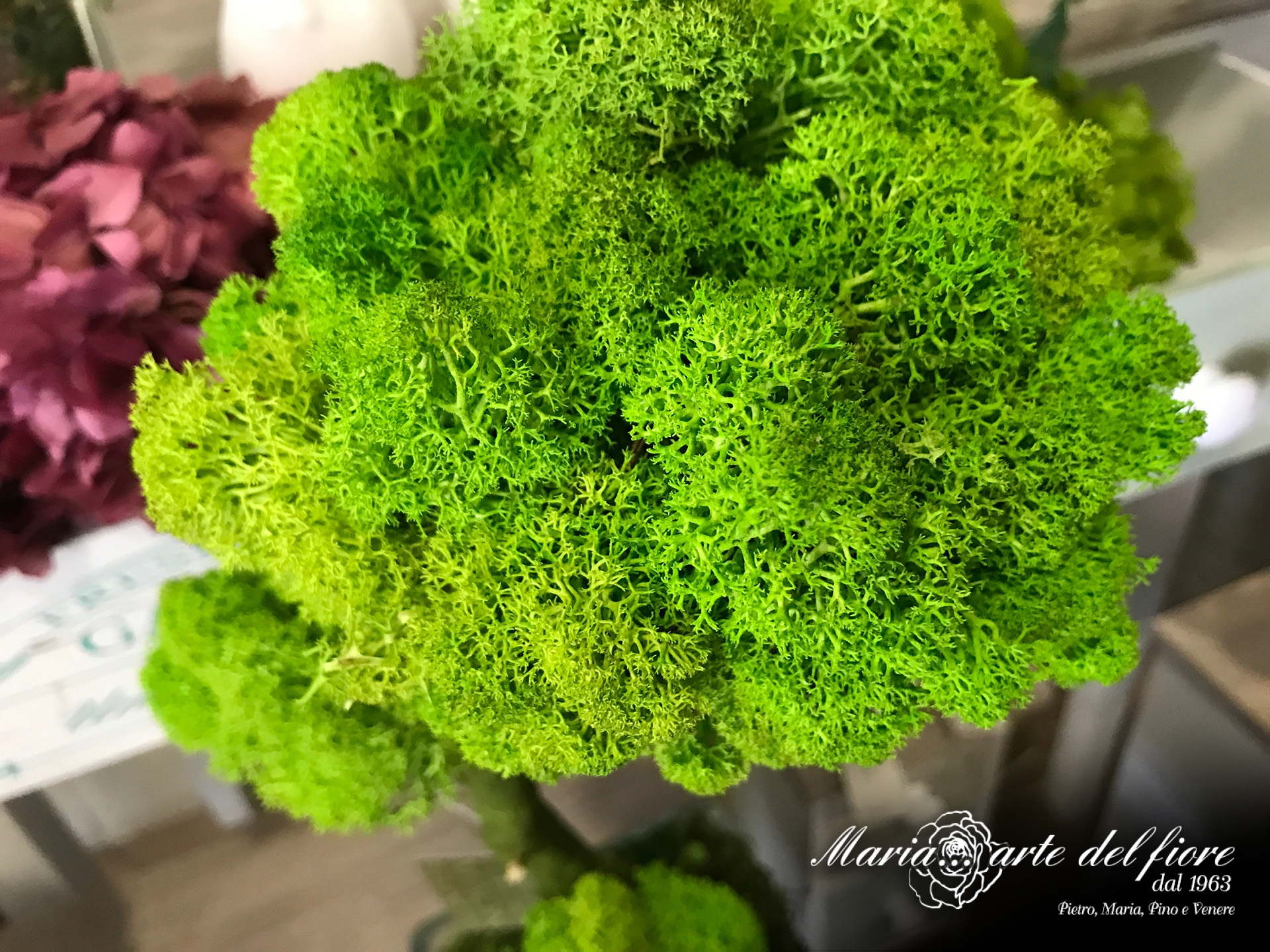 Piante stabilizzate maria arte del fiore for Fiori verdi