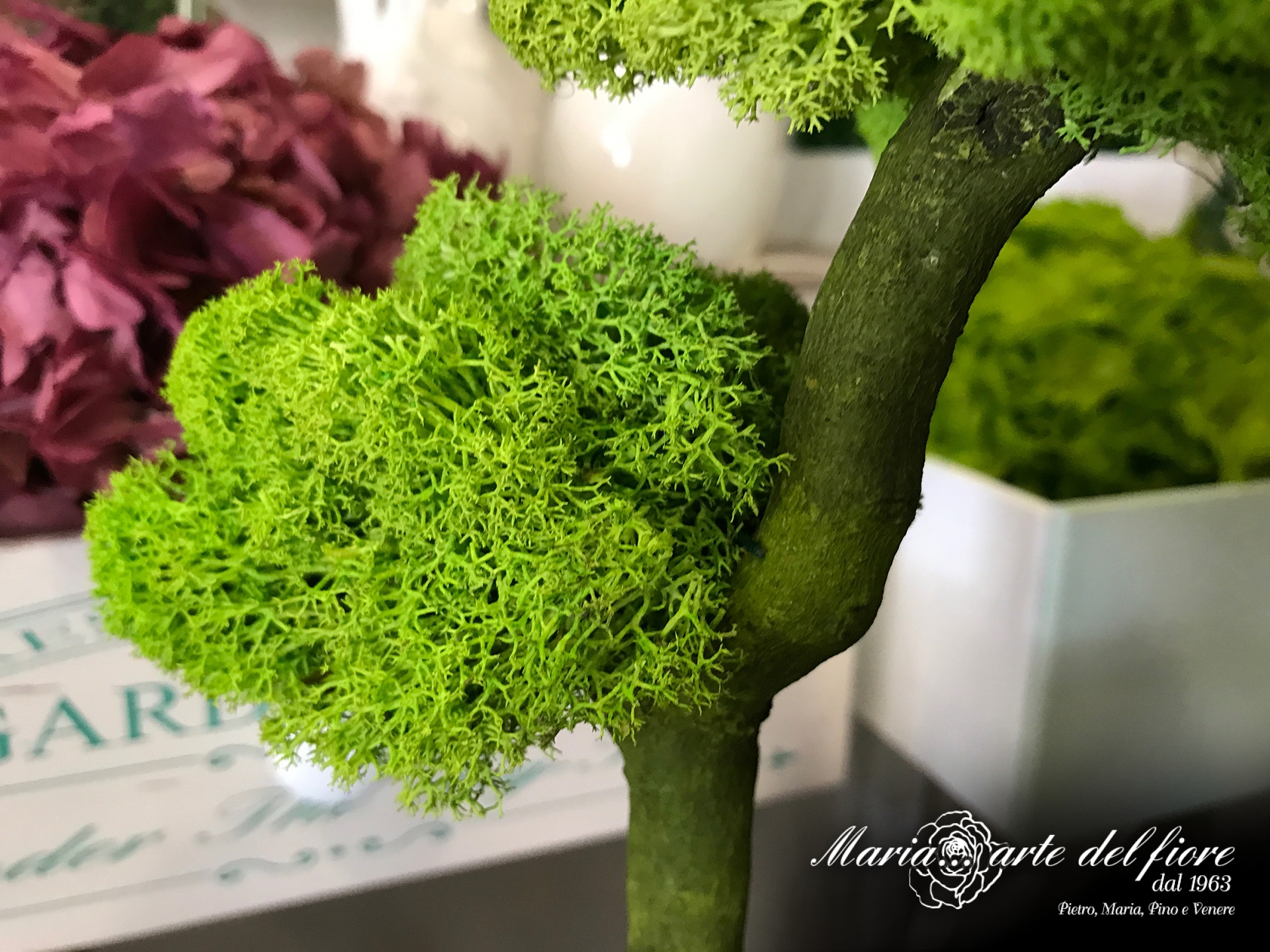 Maria-Arte-Del-Fiore-Fornitura-di-Rose-stabilizzate-Fiori-Verdi-Muschi-Licheni-stabilizzati_08
