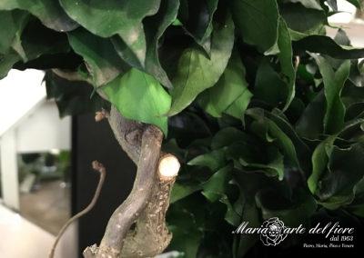 Maria-Arte-Del-Fiore-Fornitura-di-Rose-stabilizzate-Fiori-Verdi-Muschi-Licheni-stabilizzati_10
